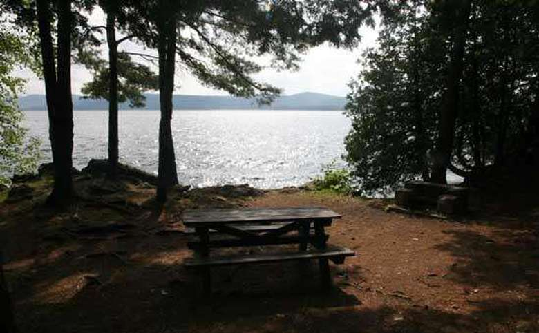 trees casting their shadow over a picnic table near the shoreline of a lake
