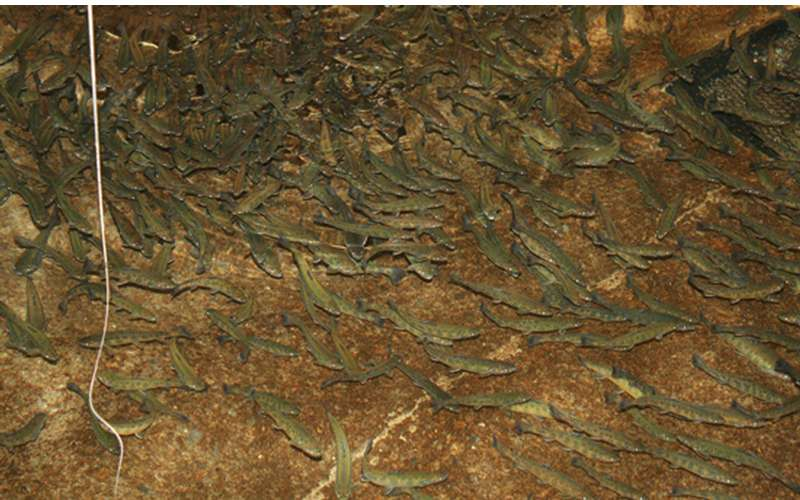 Warrensburg Fish Hatchery (7)