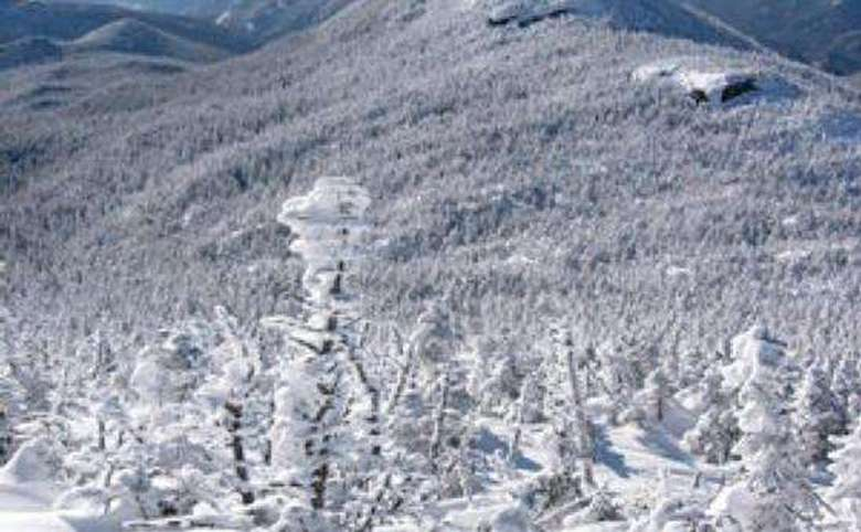 frozen trees at the summit of a mountain