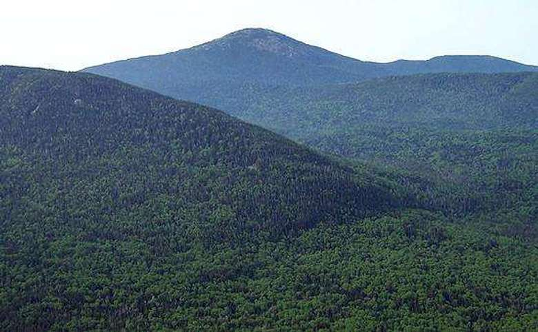 mountains covered in green trees