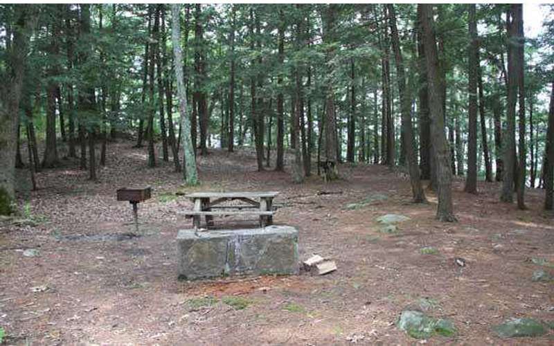 a clearing in the woods with a small picnic table and grill