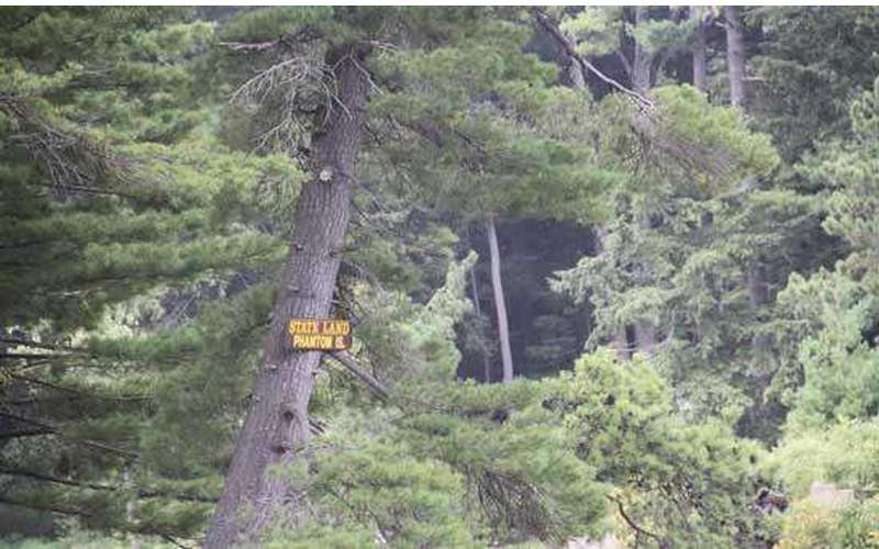 the sign for phantom island high up in a tree