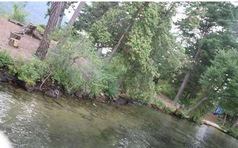 view of a lake shoreline with trees along the edge
