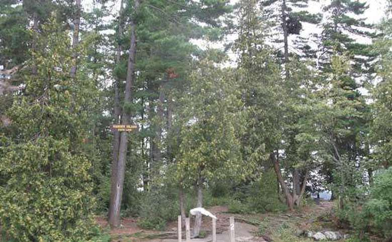 a campsite sign high up in a tree in a wooded area