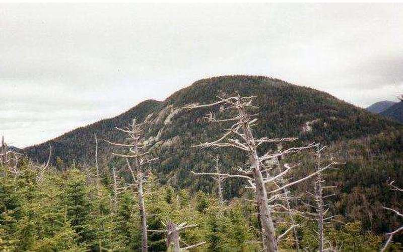 a large mountain in the distance and tall trees in front