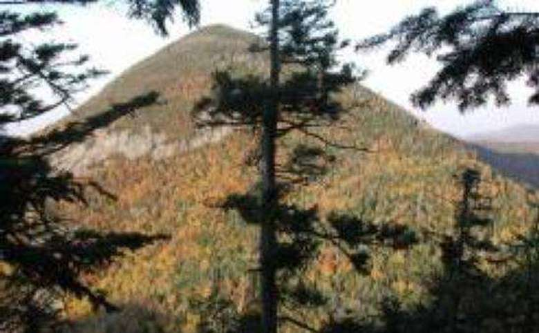 view of a mountain summit in the fall from behind some pine trees