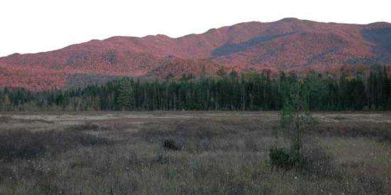 view from a field of mountains in the fall