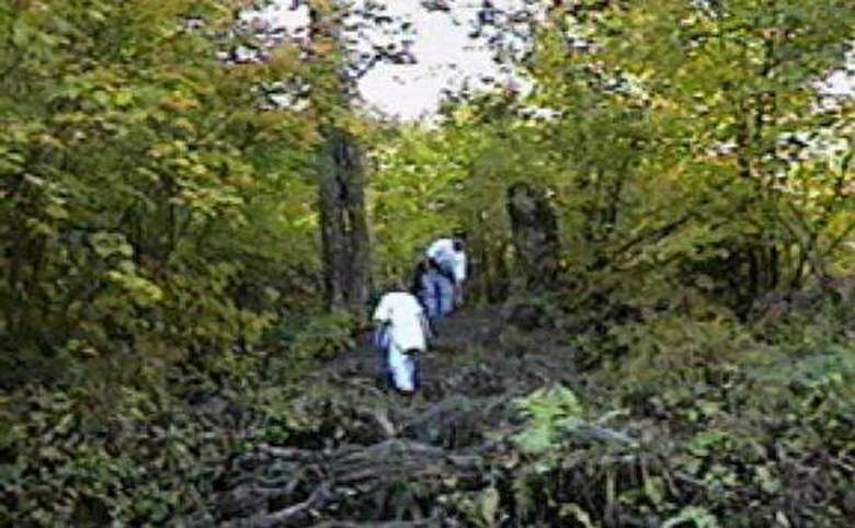 group of hikers walking through the woods