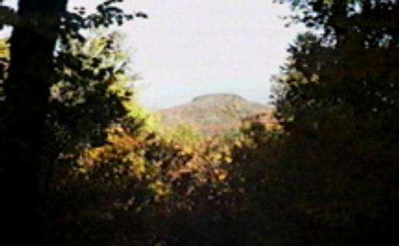 view of a mountain through the trees