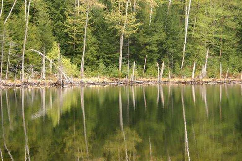 trees reflected into a calm body of water