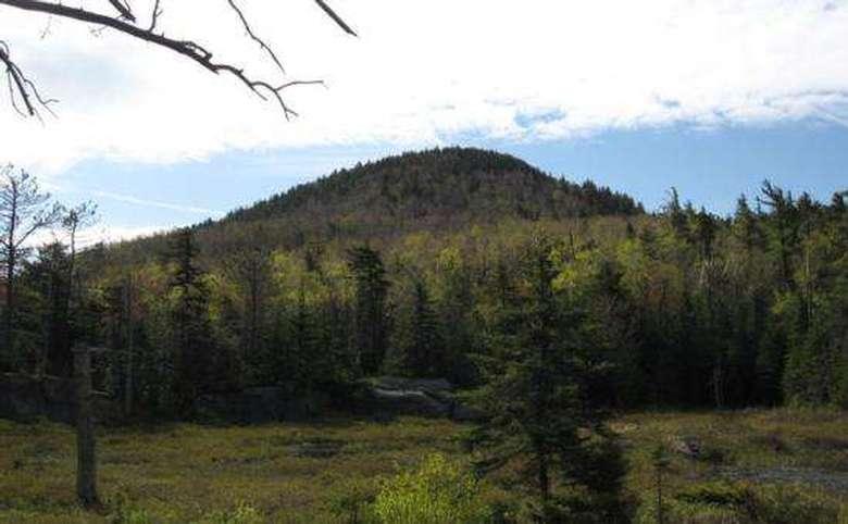 crane mountain and surrounding trees