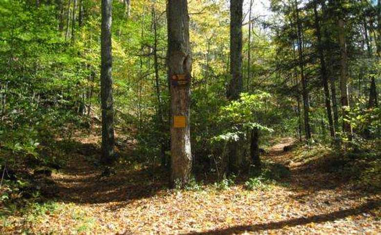trees with trail markers on them