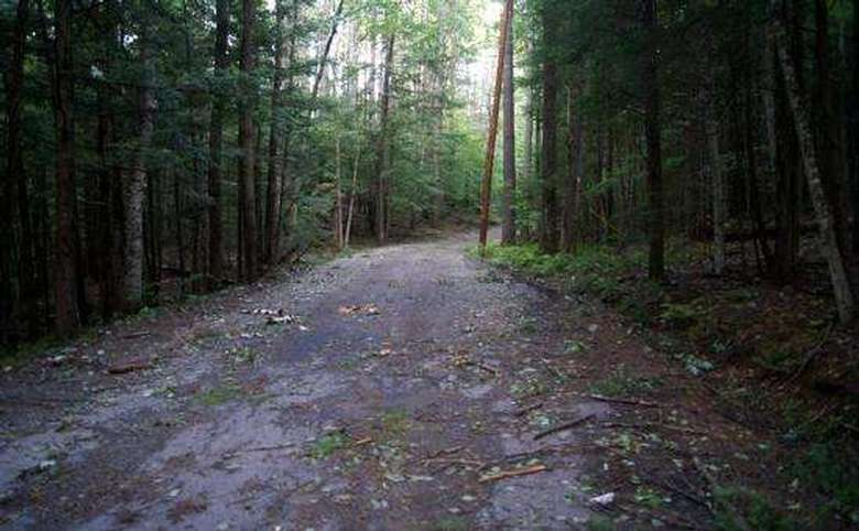 wide paved trail through the woods