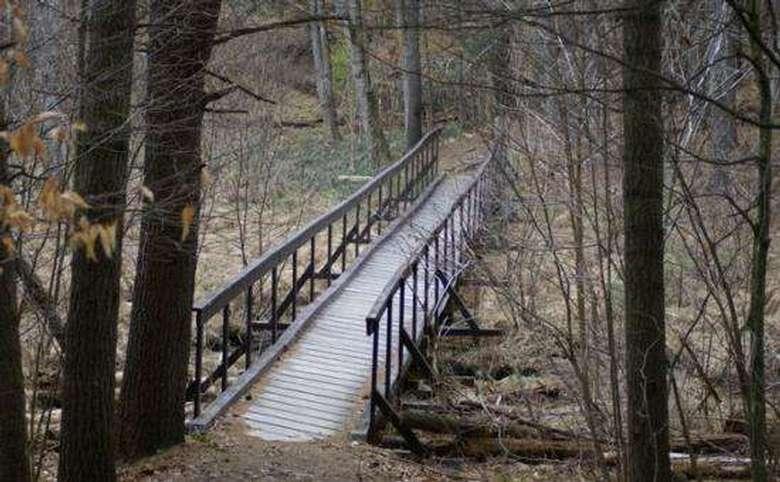wooden bridge crossing a marshy area
