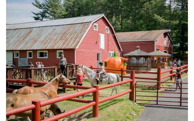 A pair of red barns with horses in front