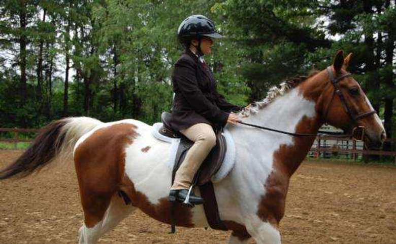 young equestrian participant riding a white and brown horse