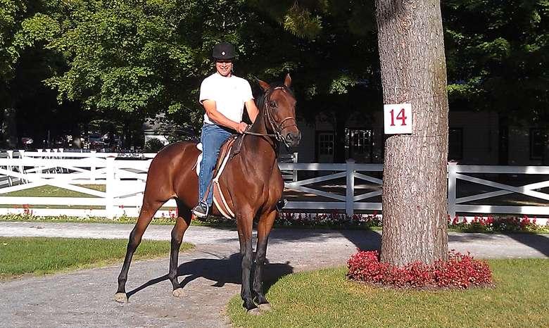 man posing atop a brown horse