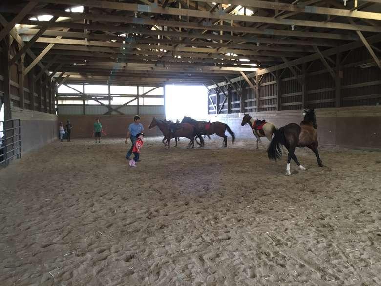 horses running around inside