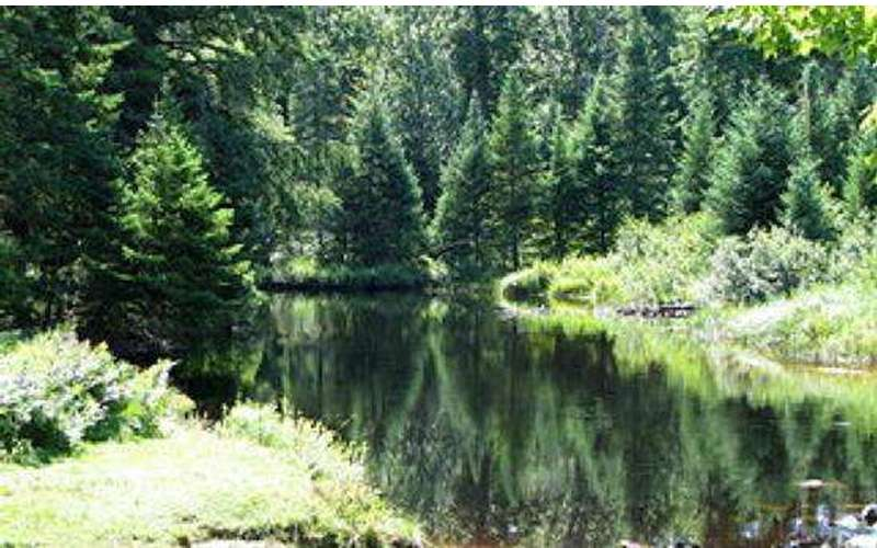 Fishing Spots in the Adirondacks: Go Adirondack Fishing & Discover
