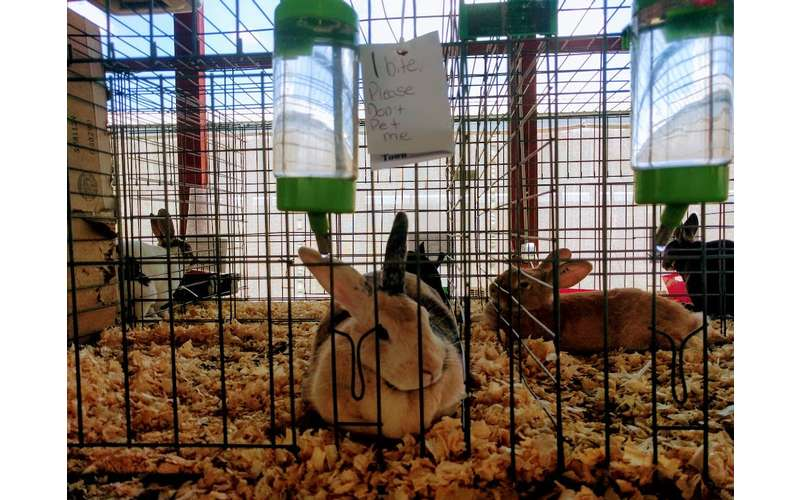 rabbits in cages