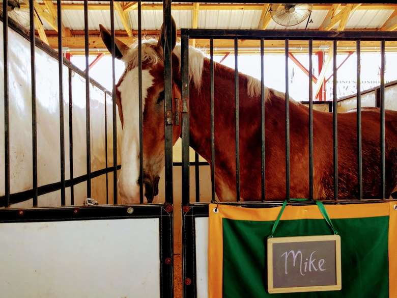 a horse with a sign that says Mike
