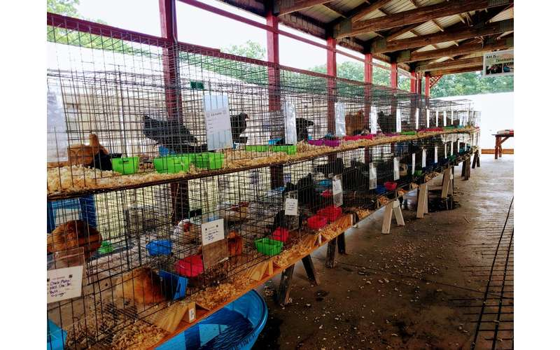 a row of chickens in cages