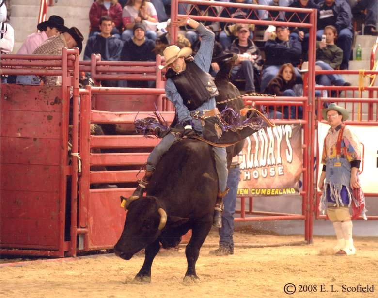 man riding a bull in arena