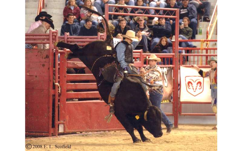 man holding onto bull during bull riding