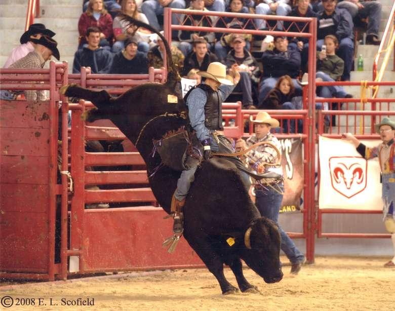 man holding onto bull during bull riding