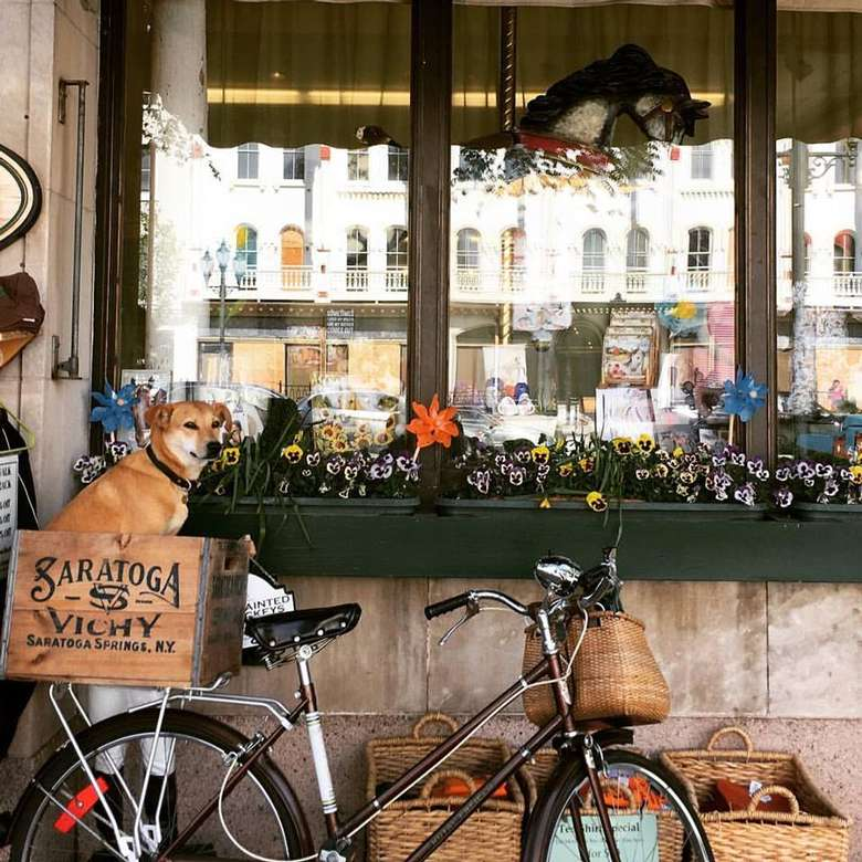 bike with a dog sitting in a crate attached to the back leaning up against a large store window
