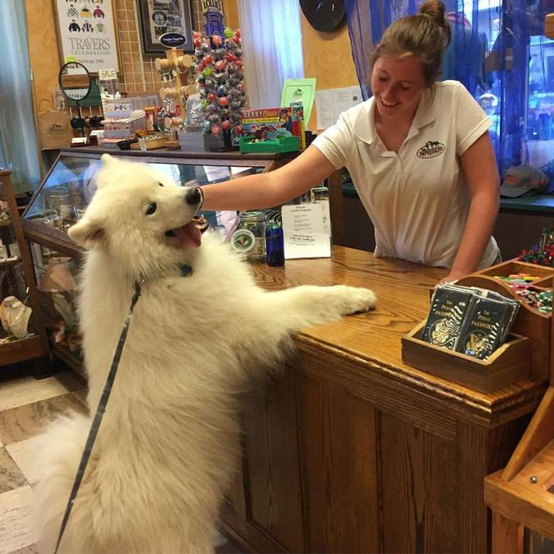 employee on one side of a counter petting a large fluffy white dog who's standing on the other side of the counter