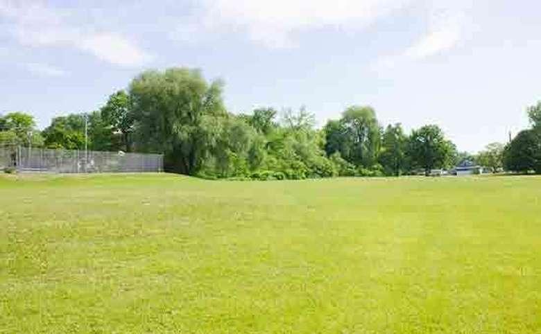Open field in the park