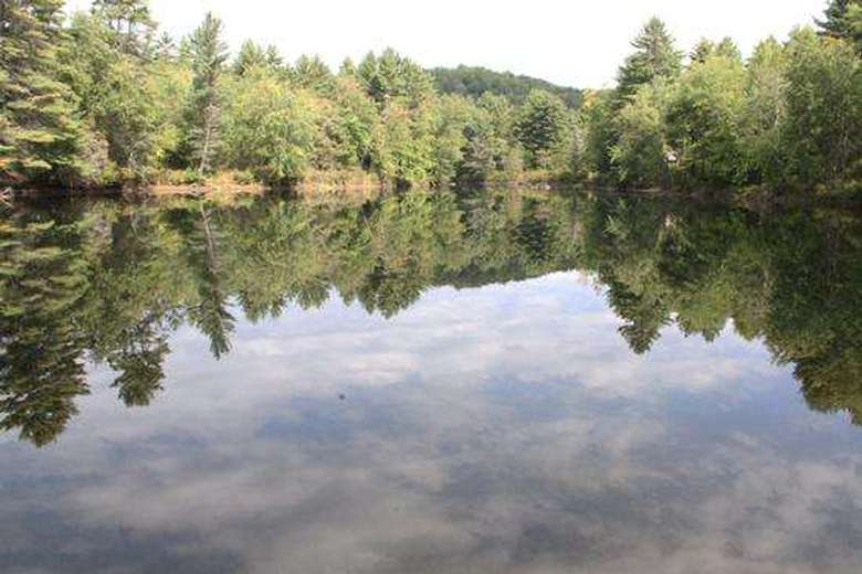 woods reflected in the water of brant lake