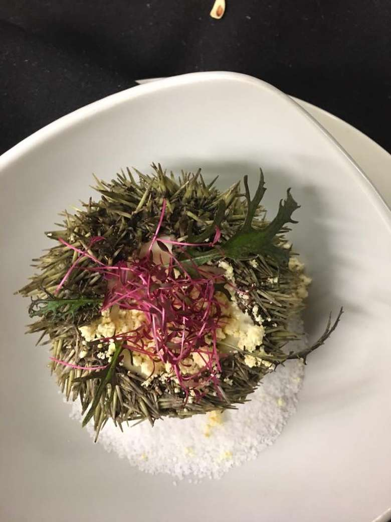 sea urchin on a plate