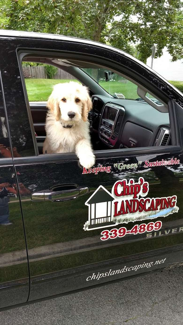 dog looking out the window of the chip's landscaping truck