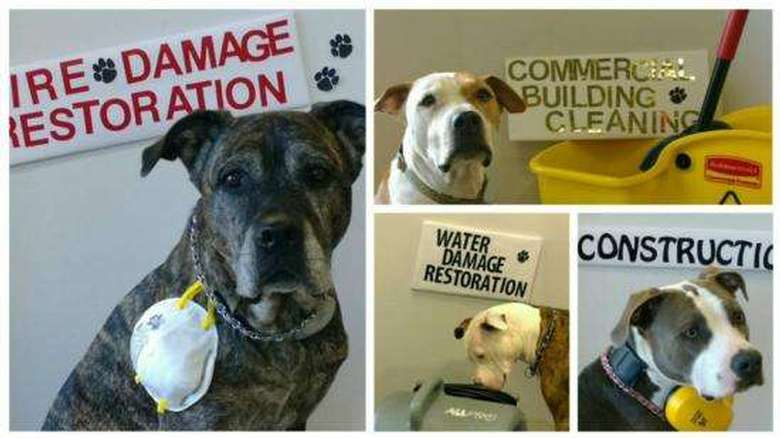 four dogs posing with signs that say fire damage restoration, construction, commercial cleaning, and water damage restoration