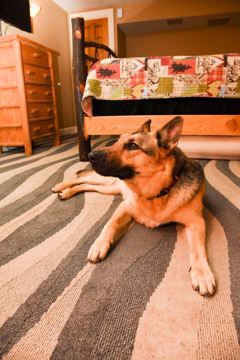 dog sitting on the floor