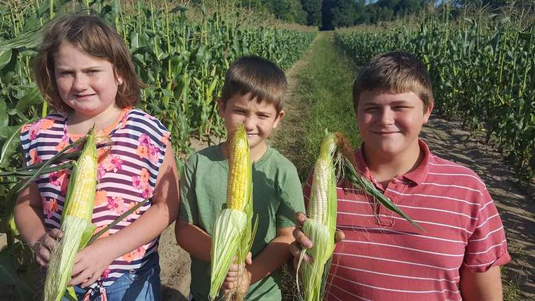 three kids each holding an ear of corn in the field