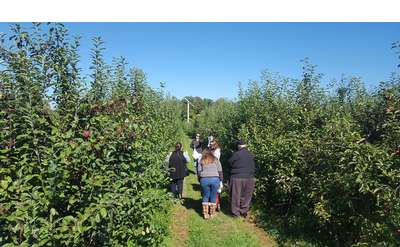 people in an orchard
