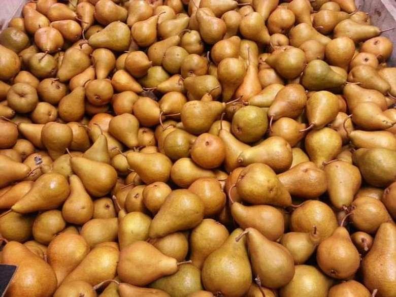 bin of Bosc pears