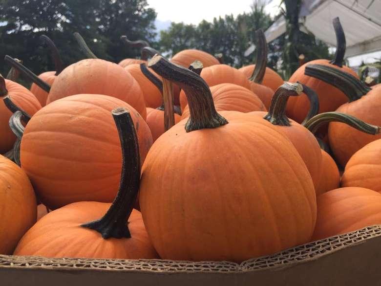 basket full of pumpkins