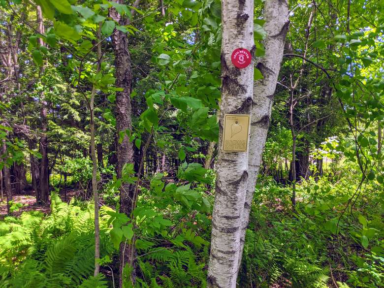 Red trail marker on a tree