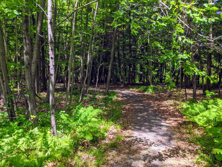 Curved path between trees