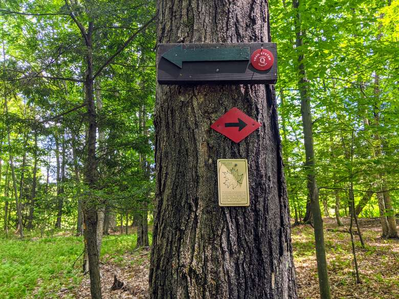 Arrows on a tree indicating path