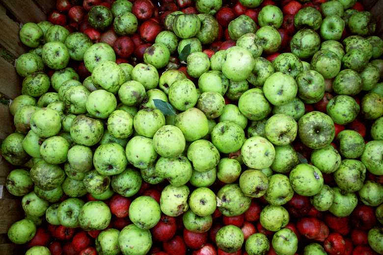 crate of spoiled green and red apples