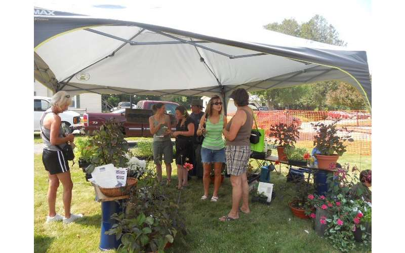 Chestertown Farmers' Market (2)