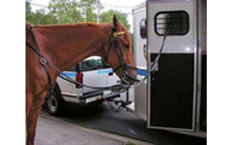 EMC Horse Transport (1)