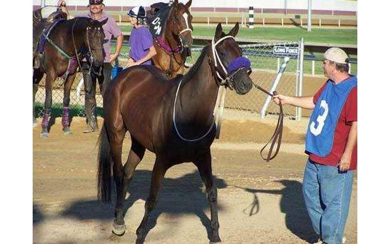 EMC Horse Transport (2)