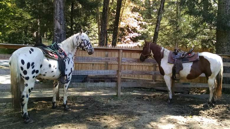 two horses in a fenced in area