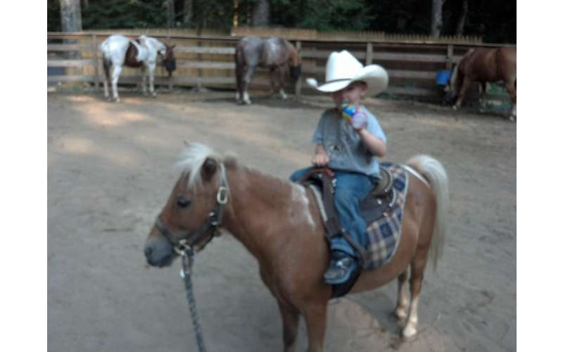 Grandson, Brody Havoc 4yrs,  Maple, mini horse ride for 6 yr old and under